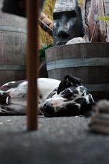 Resting under the watchful tiki eye