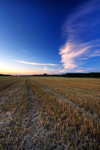 sunset field clouds tracks hdr cirrus östergötland sigma1020mmf456exdchsm johanklovsjö