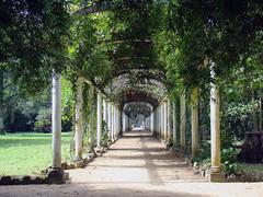 Rio's botanical gardens.