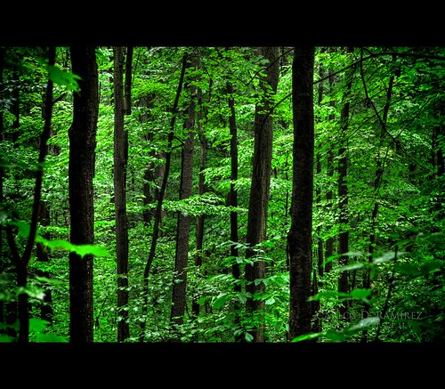 wood trees ontario canada green leaves forest nikon moraine oakridges d5000 platinumheartaward cdr35