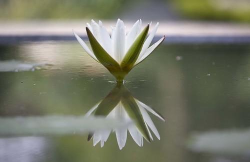 Flower @ Garden of Dreams