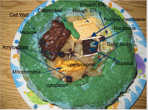 3D Plant Cell model Cake http://www.flickr.com/photos/23754355@N08/4172186106/