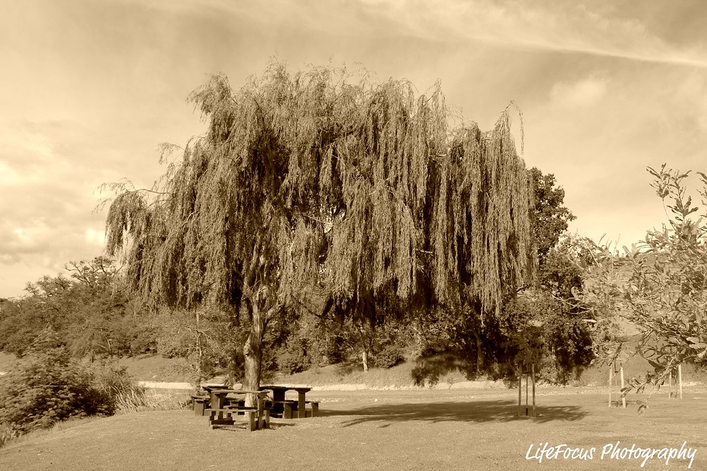 picnic spot under the weeping willow