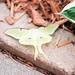 Sooc, Moth by Sarah_haras