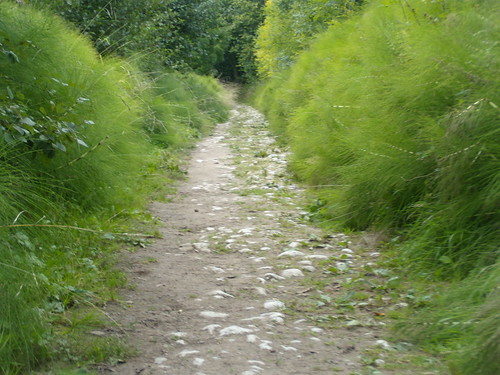 Horsetail path