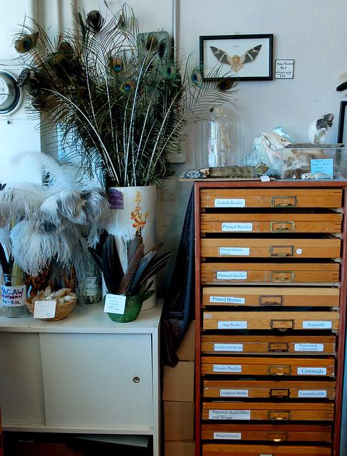 Curiosity Cabinet Living Room