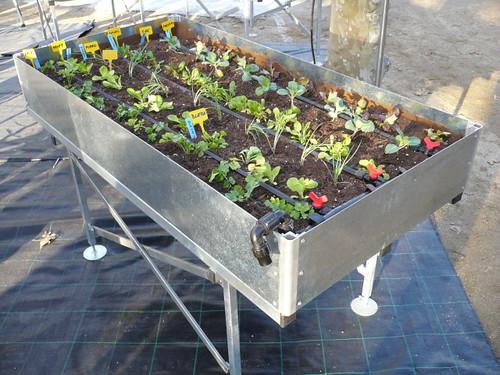 Mesa de cultivo (Fira de l'arbre, Mataró 2009)