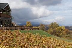 Bluemont Vineyard Vines 2