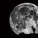 Over the Moon by * mateja *