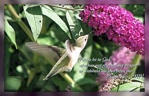 Humming Bird Praise