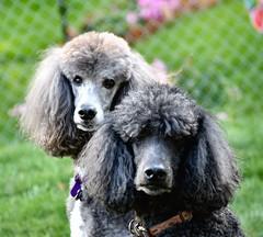 Tucker & Charley