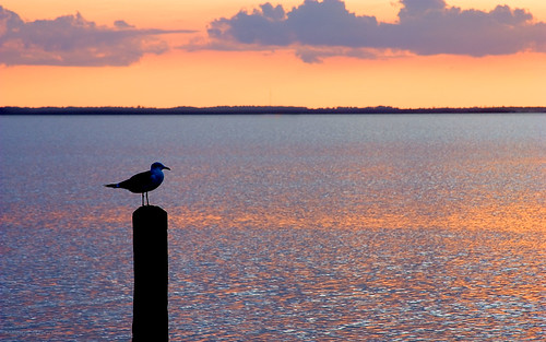 sunset bird water pier seagull sound curituck thechallengefactory