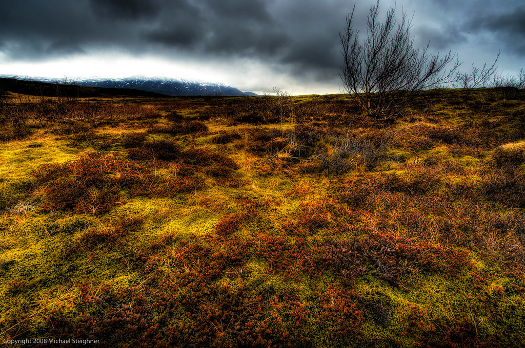 Icelandic ground cover by MDSimages.com