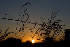 Coucher de soleil / IMG_3506