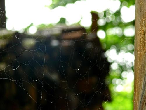 sting spiderweb elkriver fz50 panasoniclumix athensal bkhagar