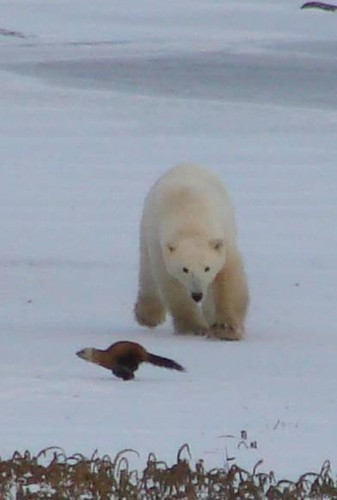 Outdoor Polar Bear Christmas Decorations