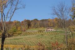 Bluemont Vineyard View 1
