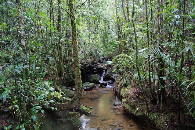 Jungle Stream, Kinabalu National Park, Borneo, Malaysia