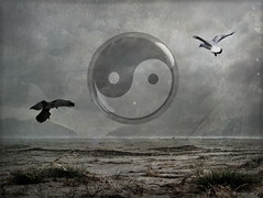Yin + Yang