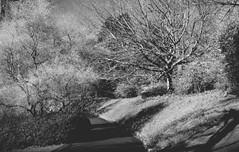 A path through the gardens at Dartington Hall (c) Chris Wormald