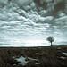 Alone by Tony Bokeh Larsson
