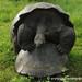 Tortoise Sizing - Galapagos Islands