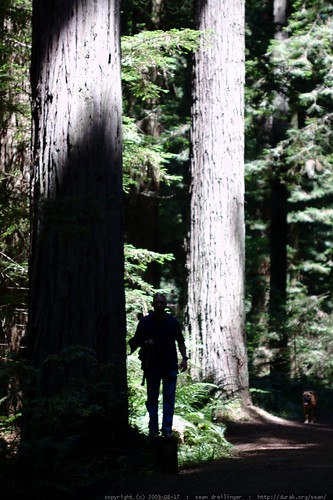 walking in the humboldt redwoods    MG 1096