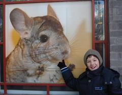 animal(1.0), rabbit(1.0), pet(1.0), mammal(1.0), fauna(1.0), whiskers(1.0), chinchilla(1.0),