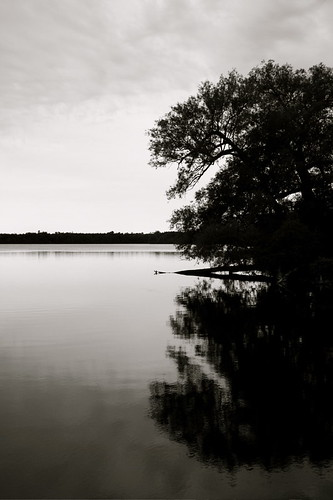 trees sky white lake black reflection water clouds calm serene mikeyd lakeonamountain mikenits