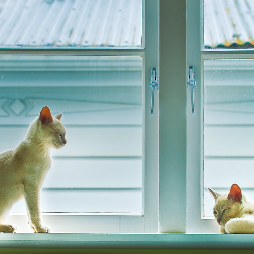 Cats / Kittens / Animals / Photography