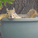 Potted Squirrel 6 7-09