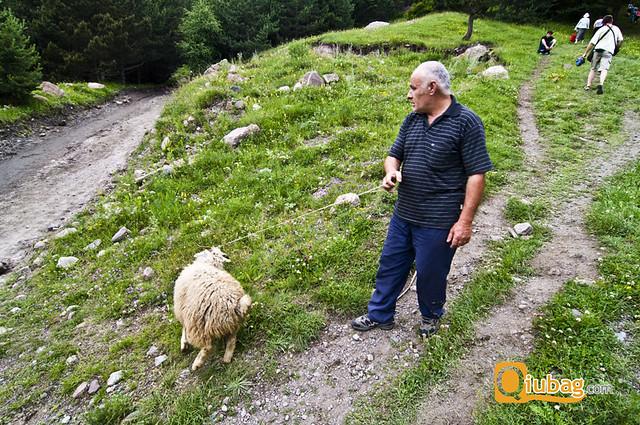 Pasterz owiec w Gruzji