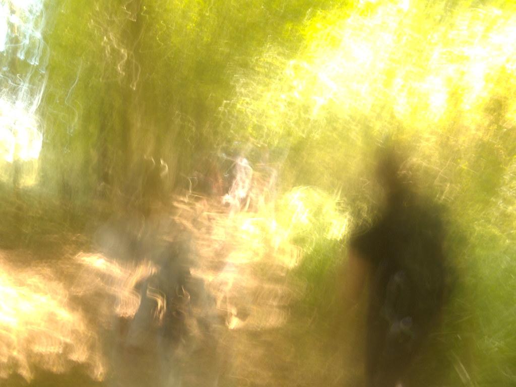 In the woods Ockley to Warnham