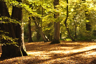 Dappled Sunlight in Highgate Wood