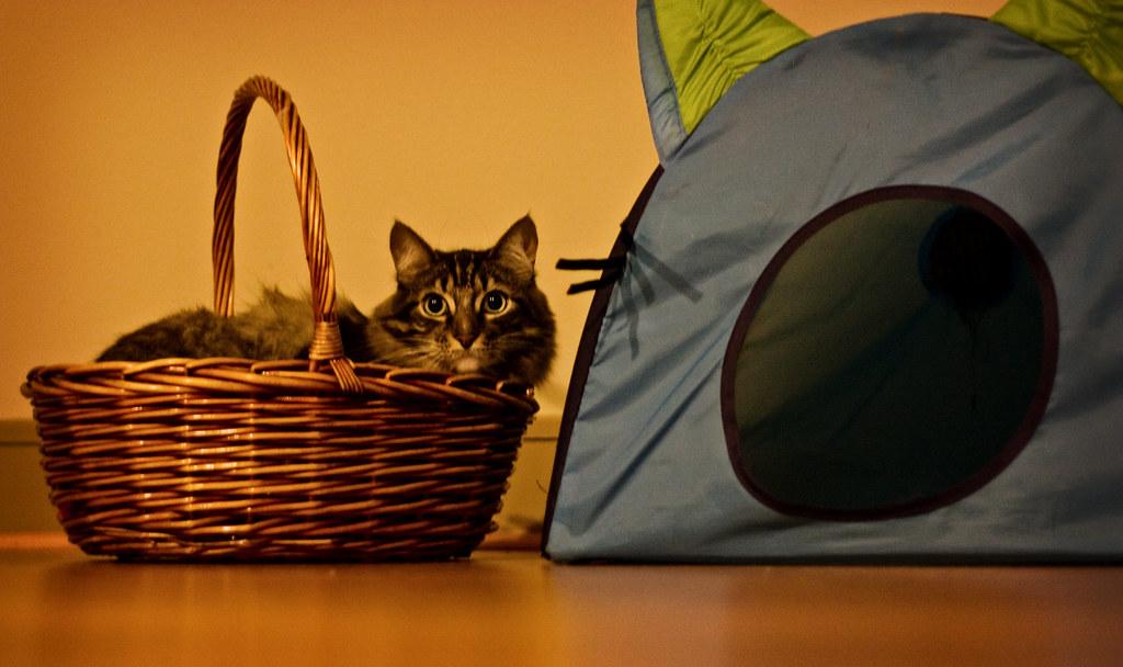 Photo: Cat in a basket
