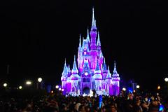 world, walt disney world, light, crowd, night, amusement park,