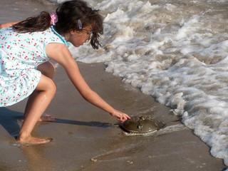 Obrázek Plumb Beach u Kings County. nyc newyorkcity ny newyork beach brooklyn waterfront seashore seacoast sheepsheadbay horseshoecrabs atlanticcoast raritanbay plumbbeach