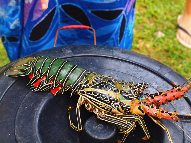 sri lanka - colorful lobster | Flickr - Photo Sharing!