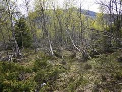Merker etter snøras i 1987, Gausdalen.