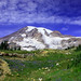 Summer on Mt Rainier 4112