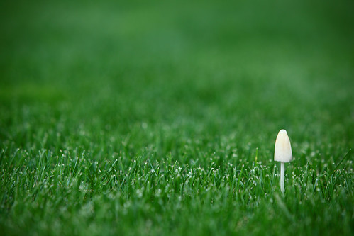school white green mushroom field grass oregon composition canon ian eos high mark soccer ii 5d shroom gervais sane yesmattyouaretheshroominthelawnoflife mattleblancquote