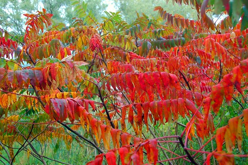 autumn trees tree fall colors leaves boston forest ma leaf massachusetts harvard arnold arboretum foliage harvarduniversity bostonma 2009 arnoldarboretum emeraldnecklace cameranikond50 exif:exposure_bias=0ev exif:focal_length=28mm exif:exposure=0008sec1125 exif:aperture=f56 treemuseum lens18200vr camera:make=nikoncorporation exif:flash=offdidnotfire camera:model=nikond50 meta:exif=1257920848 flickrstats:favorites=1 exif:lens=18200mmf3556 exif:filename=dscjpg exif:vari_program=auto exif:shutter_count=36763 meta:exif=1350400836