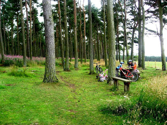 Do You Take Your Bikes Along When You Go Camping?