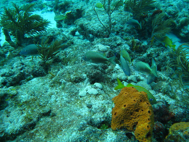 15 florida keys reef fish 2 flickr photo sharing for Florida reef fish