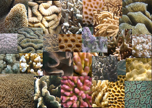 Hayman Coral Collage