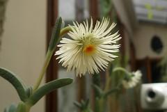 Cacti & Succulent '09.
