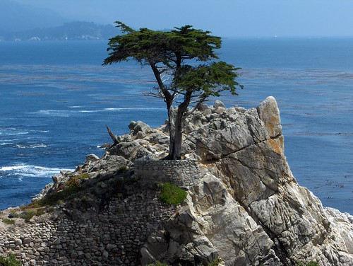 The Lone Cyprus, 17-Mile Drive, Carmel, CA by jamehand