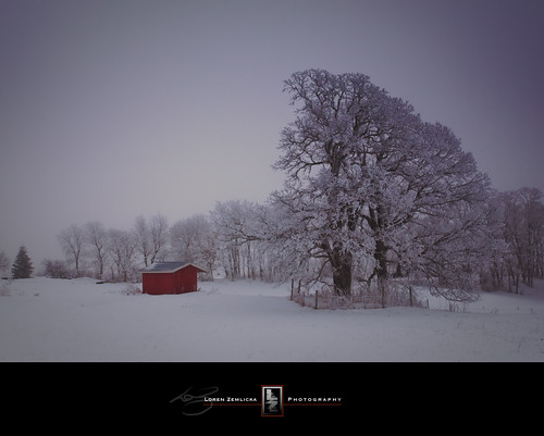 trees winter red white snow cold nature fog wisconsin rural landscape photography countryside photo midwest frost image hoarfrost country shed january foggy picture explore shack canonef1740mmf4lusm 2010 fitchburg canoneos5d flickrexplore danecounty lorenzemlicka
