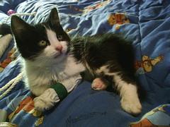 Takun - 3 meses