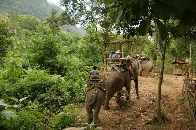 2009-08-30 09-03 Luang Prabang 216 Elephant Park